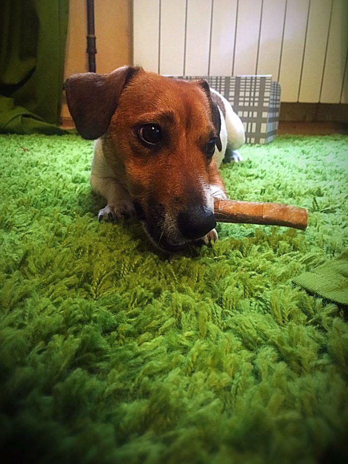 Лакомство для собак Бычий бибер