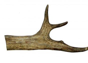 Рог оленя #26 23см