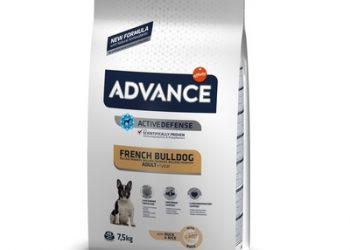 Advance Для Французских Бульдогов (French Bulldog)