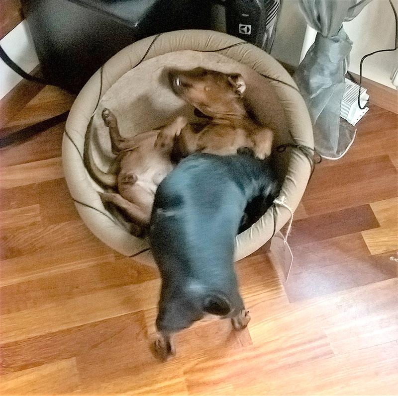 Лежанка для собак и кошек Николас