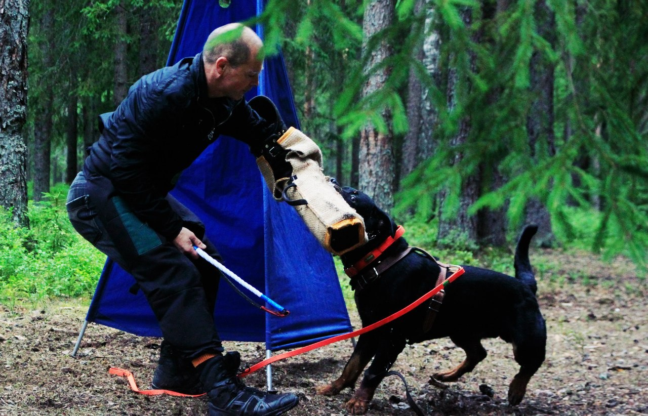 Ошейник из биотана для крупных пород собак с ручкой
