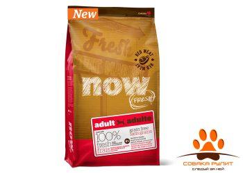 Корм NOW Natural holistic беззерновой для взрослых собак со свежим мясом ягненка