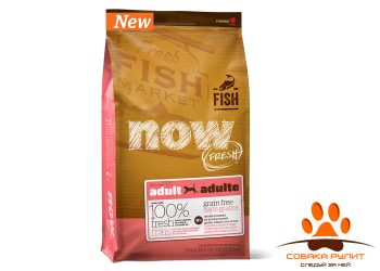 Корм NOW Natural holistic беззерновой для взрослых собак с форелью и лососем для чувствительного пищеварения