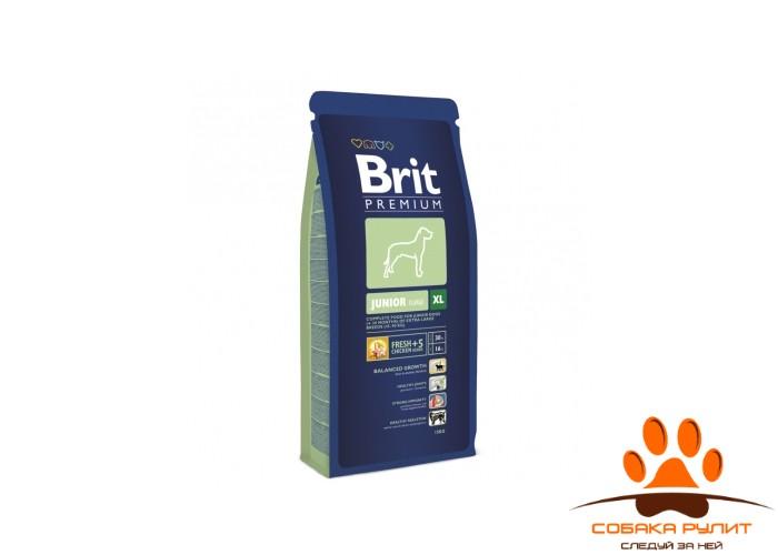 BRIT Premium «Junior XL»