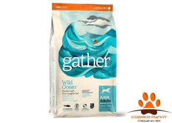 GATHER Wild Ocean Fish DF