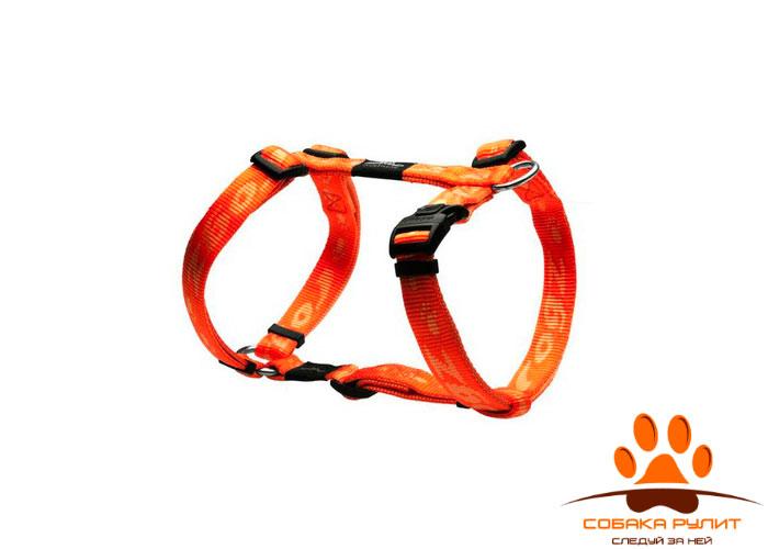 """Rogz шлейка для собак """"Alpinist"""""""