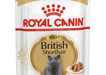 British Shorthair Adult (в соусе)