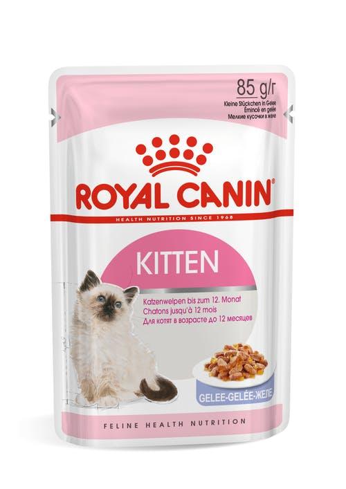 Kitten (в желе)