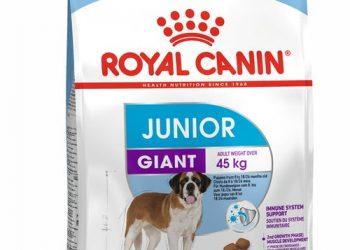 Giant Junior